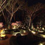 ночное освещение сада