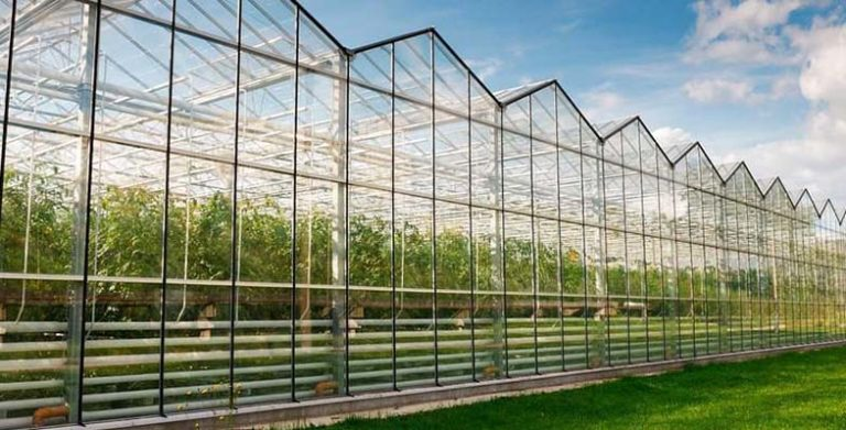 постройка теплиц для овощного бизнеса